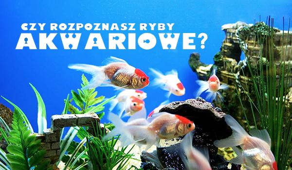 Czy rozpoznasz ryby akwariowe?