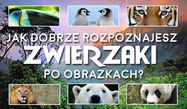 Jak dobrze rozpoznajesz zwierzaki po obrazkach?