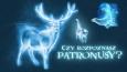 Czy rozpoznasz patronusy z Harry'ego Pottera?