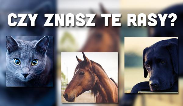 Czy rozpoznasz rasy psów, kotów i koni?