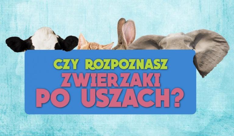 Czy rozpoznasz zwierzaki po uszach?