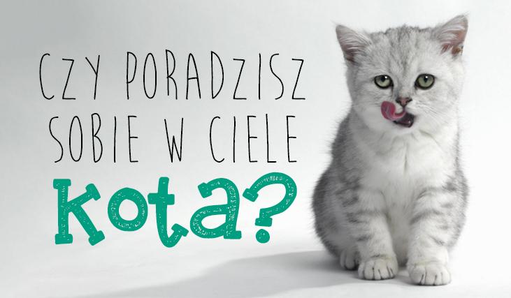 Czy poradzisz sobie w ciele kota?