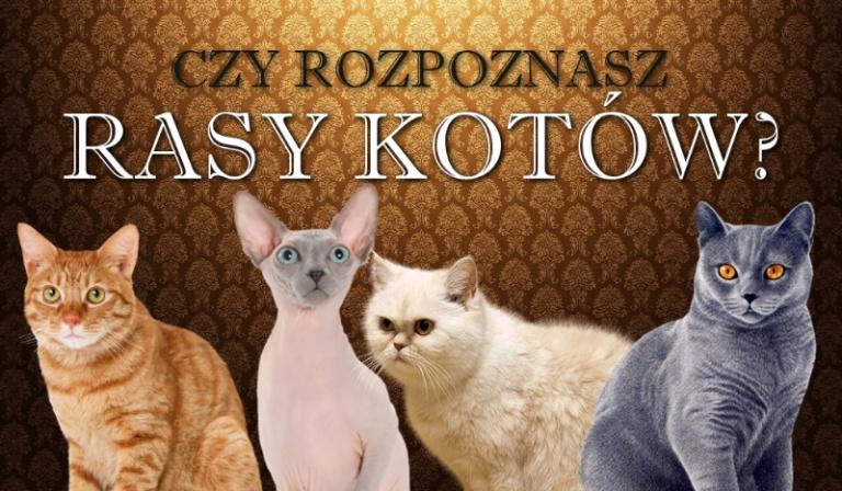 Czy rozpoznasz rasy kotów?