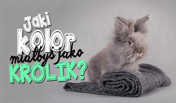 Gdybyś był królikiem, to jakiego byłbyś koloru?