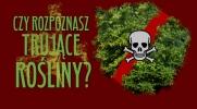 Czy rozpoznasz trujące rośliny i wyroby z nich?