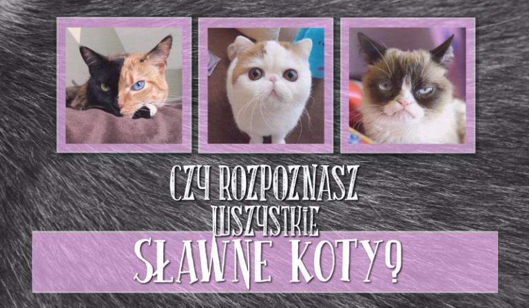 Czy rozpoznasz wszystkie sławne koty?