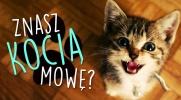 Czy znasz kocią mowę?