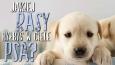 Jakiej rasy byłbyś w ciele psa?