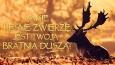 Jakie leśne zwierzę jest Twoją bratnią duszą?