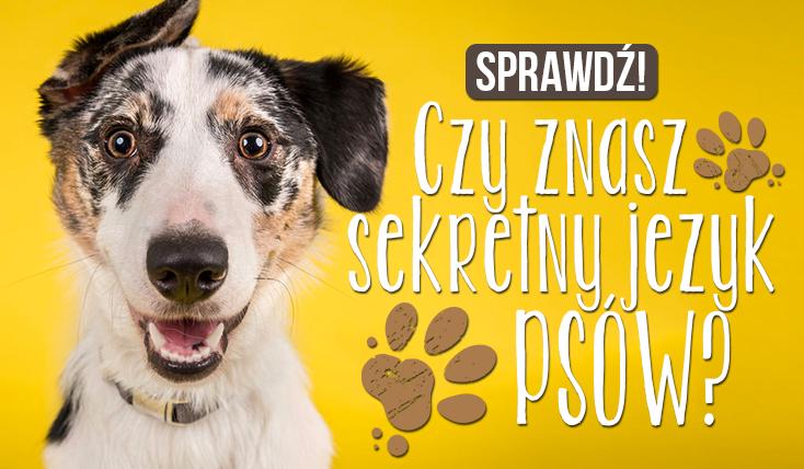 Czy znasz sekretny język psów?