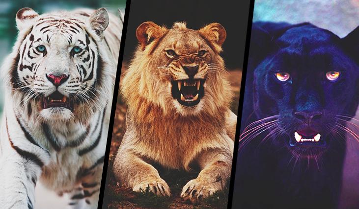 Którym dzikim kotem jesteś?