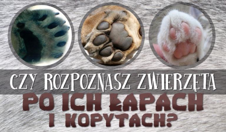 Czy rozpoznasz te zwierzęta po ich łapach i kopytach?