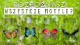 Czy rozpoznasz wszystkie motyle?