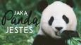 Jaką pandą jesteś?
