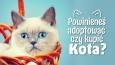 Powinieneś adoptować czy kupić kota?