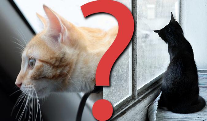 """9 pytań z serii """"Co wolisz?"""" dla kociarzy!"""