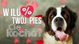 W ilu procentach Twój pies Cię kocha?