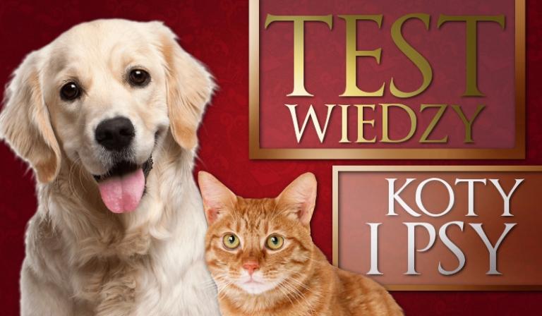 Test wiedzy o psach i kotach!