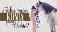 Koń jakiej maści do Ciebie pasuje?
