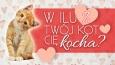 W ilu procentach Twój kot Cię kocha?