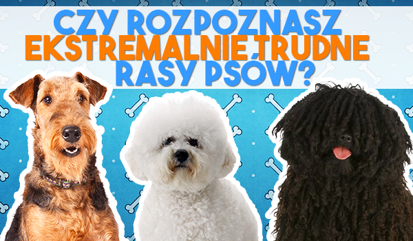 Czy rozpoznasz ekstremalnie trudne rasy psów?