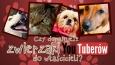 Czy uda Ci się dopasować zwierzaki Youtuberów do ich właścicieli?