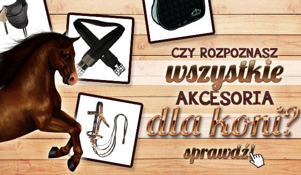 Czy rozpoznasz wszystkie akcesoria dla koni?
