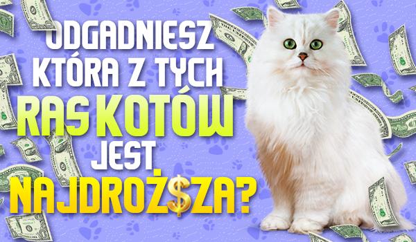 Czy odgadniesz, która z tych ras kotów jest najdroższa?