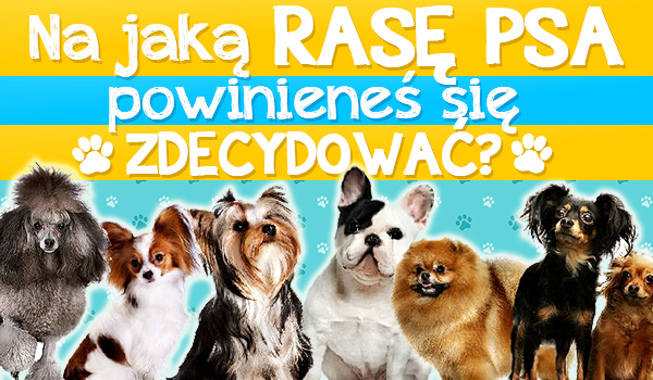 Na jaką rasę psa powinieneś się zdecydować?