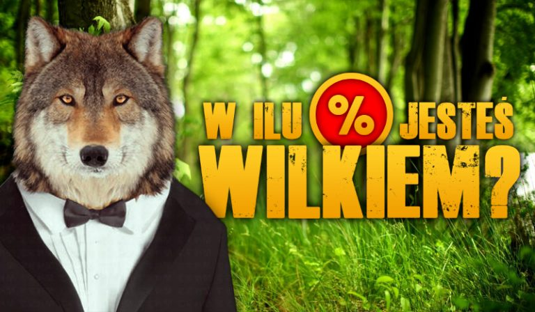 W ilu procentach jesteś wilkiem?