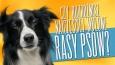 Czy rozróżnisz najczęściej mylone rasy psów?