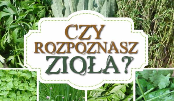 Czy rozpoznasz zioła?