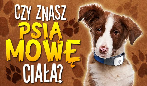 Czy znasz psią mowę ciała?