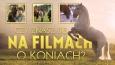Znasz się na filmach o koniach?