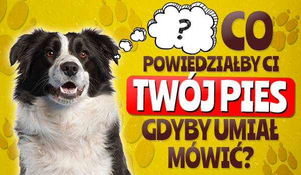 Co powiedziałby Twój pies, gdyby umiał mówić?