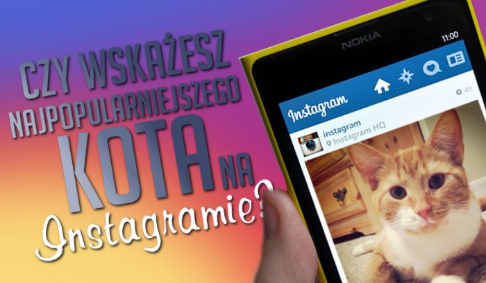 Czy potrafisz wskazać najpopularniejszego kota na Instagramie?