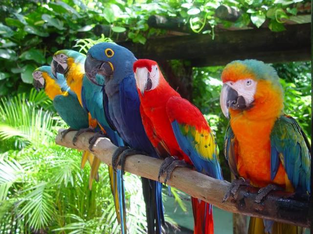 Сколько стоит говорящий попугай ара