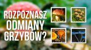 Jak dobrze znasz odmiany grzybów?
