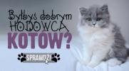 Czy byłbyś dobrym hodowcą kotów?