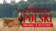 Zwierzęta polski - odgadnij je wszystkie!
