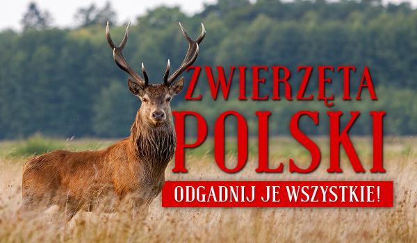 Zwierzęta polski – odgadnij je wszystkie!