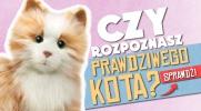 Rozpoznasz PRAWDZIWEGO kota?