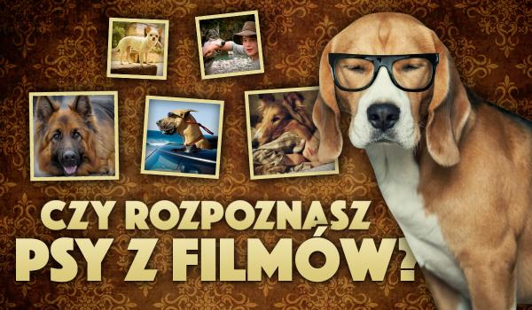 Czy potrafisz dopasować imiona psów z filmów do obrazków?