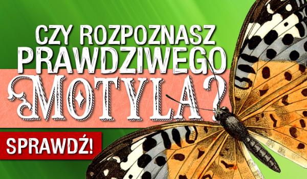 Czy rozpoznasz PRAWDZIWEGO motyla?