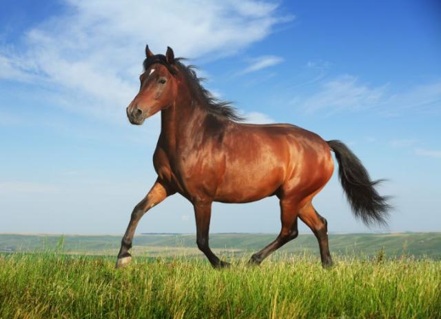 Stwórz wymarzonego konia . | sameQuizy