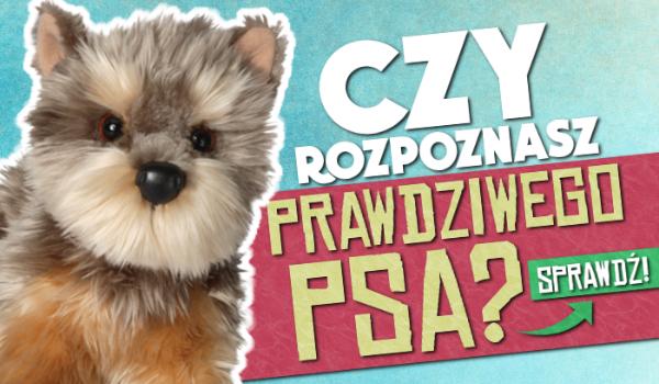 Rozpoznasz PRAWDZIWEGO psa?