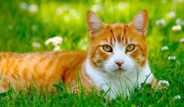 Kotem Jakiej Rasy Byś Był