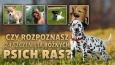 Czy rozpoznasz 24 szczenięta różnych psich ras?