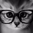 Kociczka