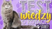Test wiedzy o kotach!
